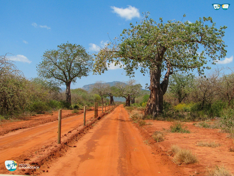 Standardowa droga przez sawannę w Kenii
