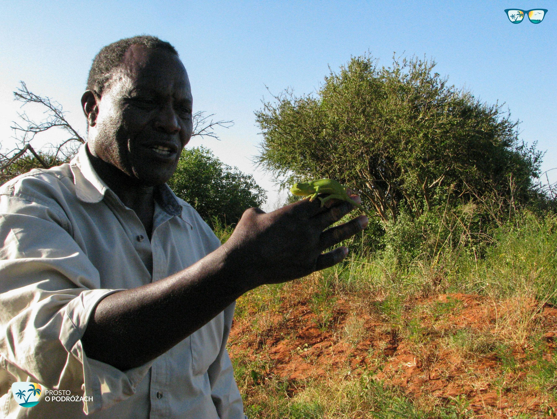 Safari w Kenii - nasz kierowca i ego sokoli wzrok