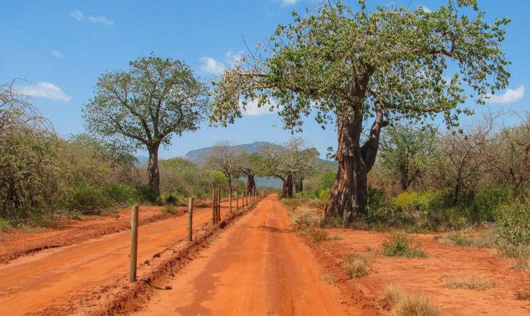 Kenia safari